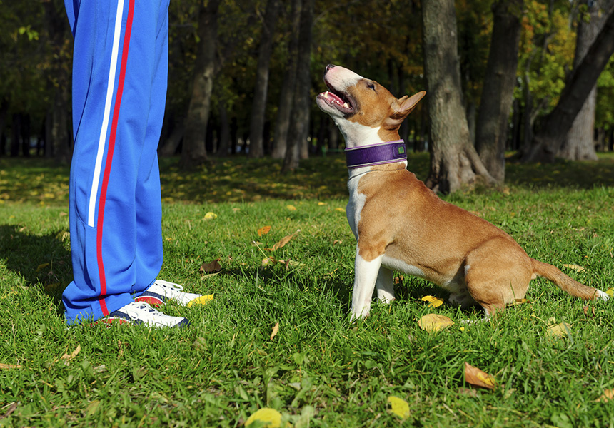 7 Tips For Teaching Your Dog Respect