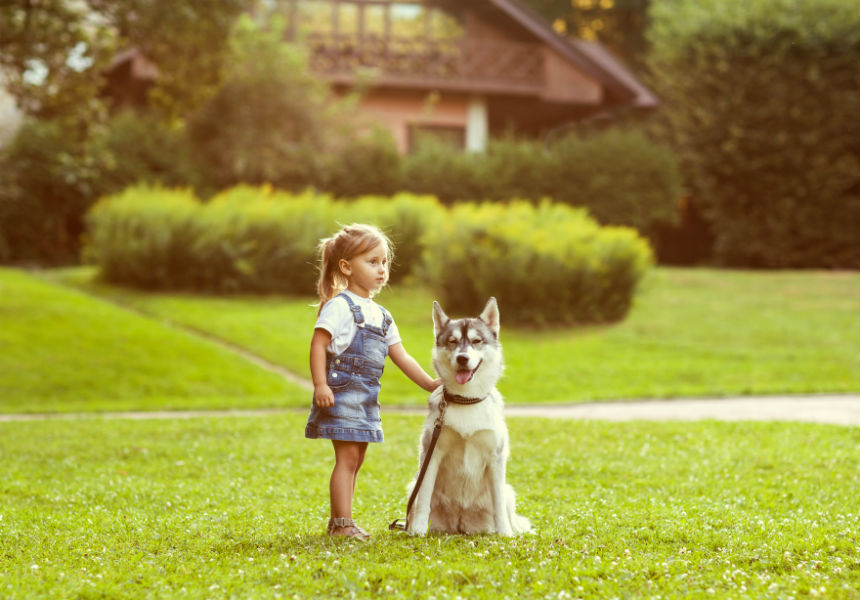 A 9-Part Guide To Becoming A Dog Owner