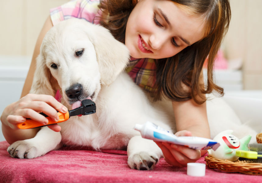 6 Essential Principles Of Grooming Your Dog