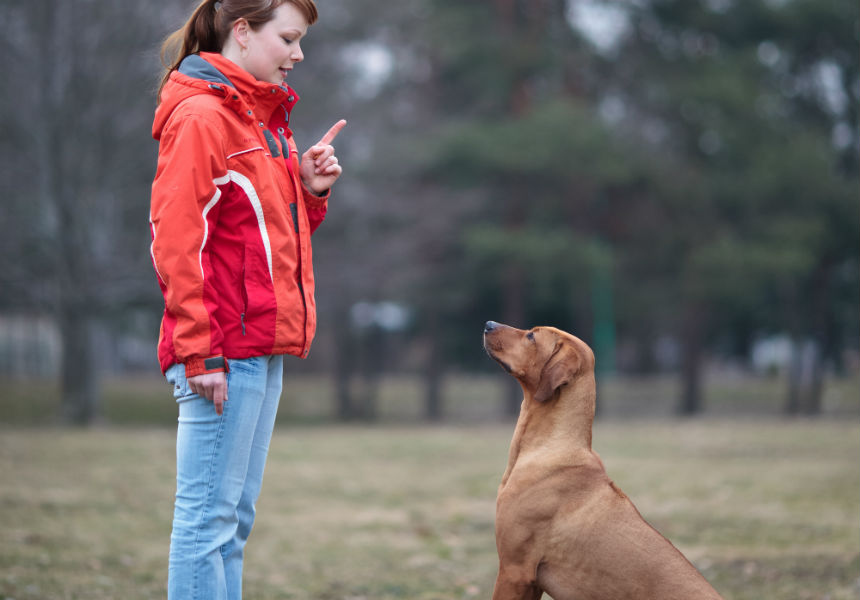 7 Keys To Training Your Dog