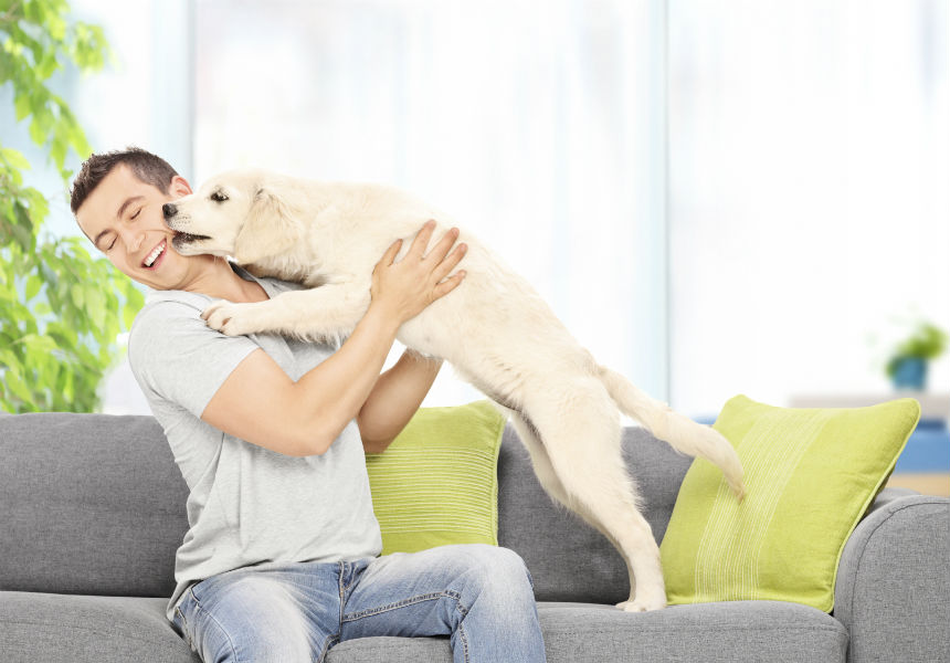 9 Guidelines For Dog Training