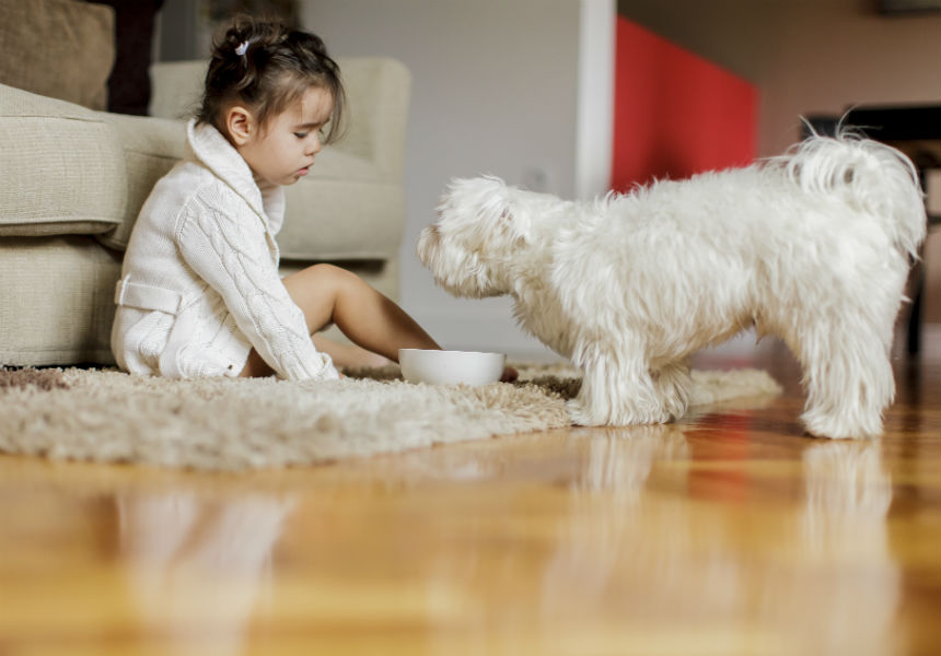 8 Common Dog Owner Mistakes When Getting A Puppy