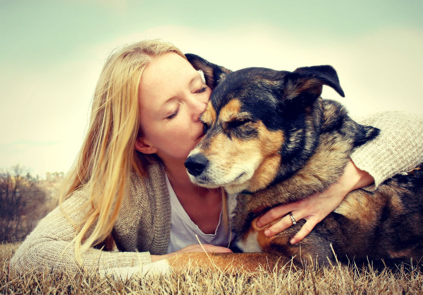 7 Tips For Understanding The Stages Of A Dog's Life