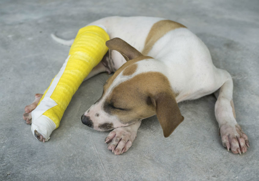 A 7-Part Checklist For Dog First Aid