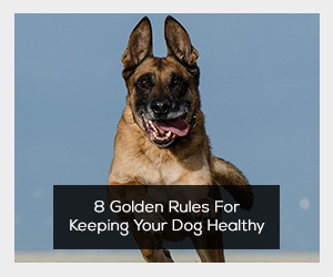 dogownership101.com