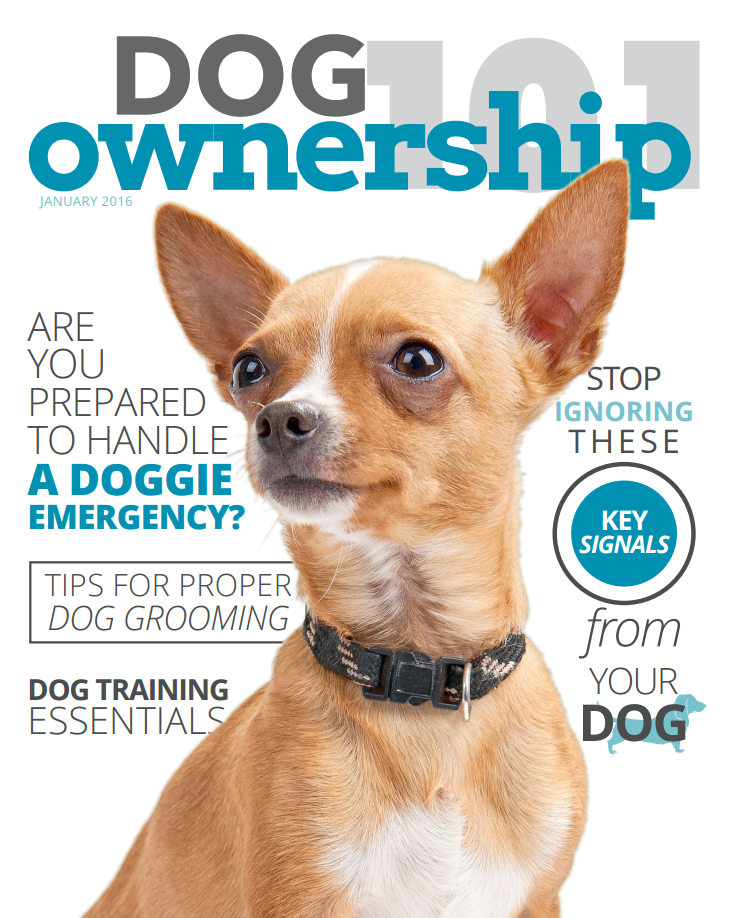 dog_ownership_101_janfeb_cover